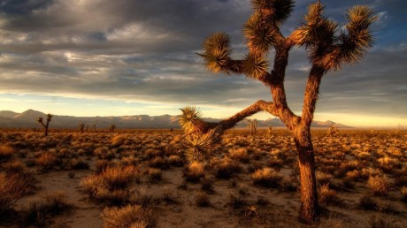 joshua-tree-hd-wallpaper-1024x576